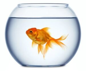 bobsfish