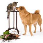 6 Tips to Sell a Home with Pets