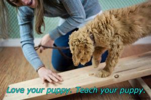 PuppyPreschoolTeeter2