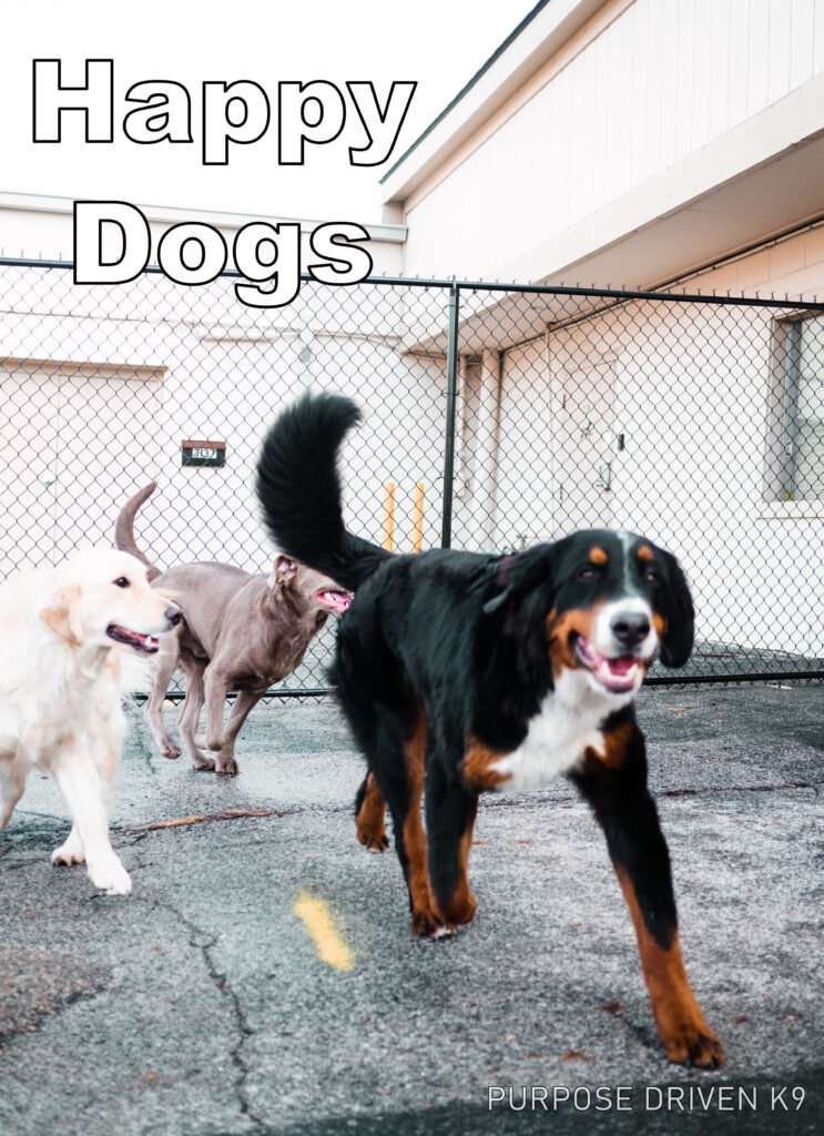 Happy Dogs Daycare