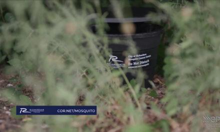 Recent rain increases mosquito activity