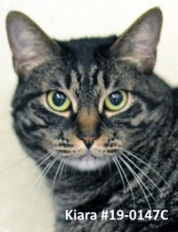 Animal Shelter Pet of the Week
