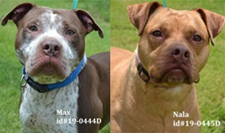 Animal Shelter Pets of the Week