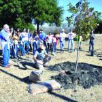 Celebrate Arbor Day Year-Round with City's Tree Planting Program