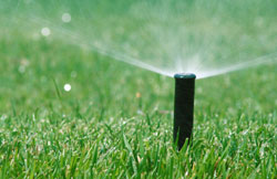 Watering Returns to Evenings and Mornings Only Beginning April 1