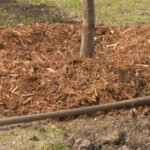 Mulching Grass Helps Municipal Park Areas