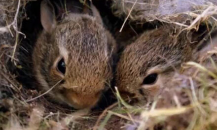 Animal Services Offers Tips re: Baby Wildlife