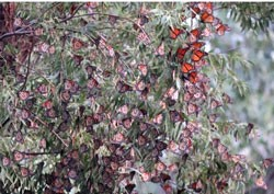 City's Butterfly Gardens Ready for Monarch Migration
