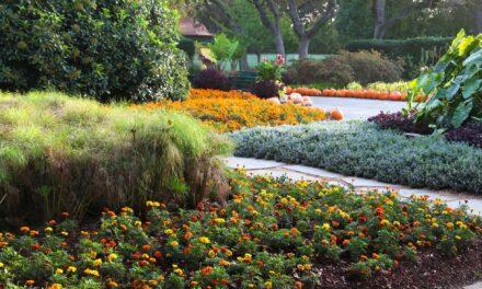 Senior Center Programming: Live, Virtual Tour of Arboretum Oct. 30