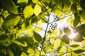 Tree Planting Tips Featured in Latest Environmental Newsletter