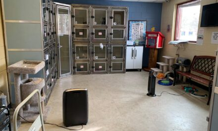 generator helps keep animal shelter lights on and pets warm during winter weather event