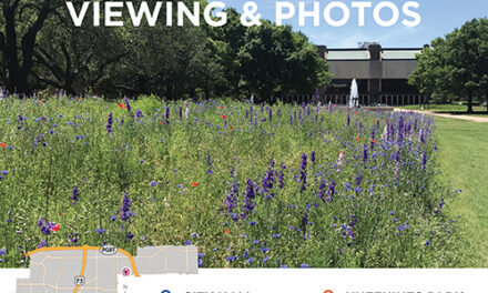 Best Locations to See Wildflowers in Bloom