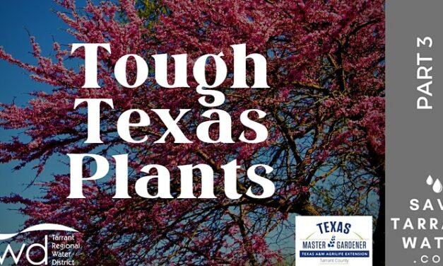 "Free Online Class June 29 Features ""Texas Tough"" Trees, Bushes, Vines"