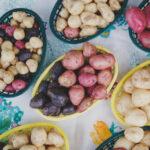Potatoes Fuel Protective Bacteria!