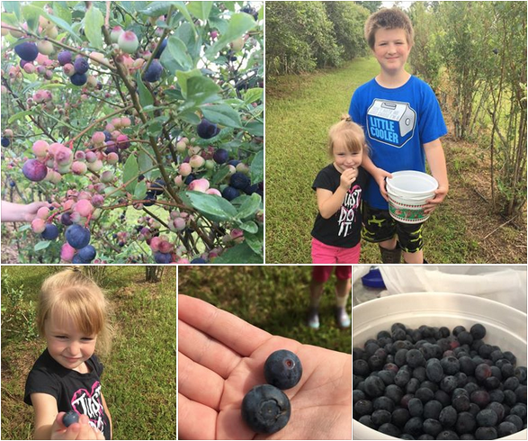 Berry picking in Baton Rouge