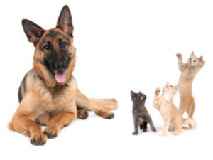 German Shepherd and kittens