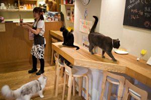 Cat cafe in Japan