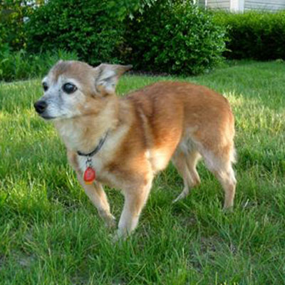 Photo of adopted rescue dog Lilac on a green lawn