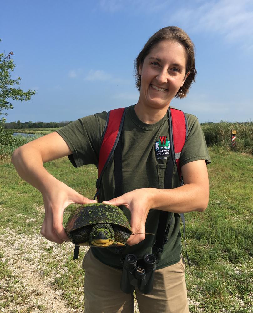 DNR wildlife biologist Diane Robinson with rare Blanding's turtle.