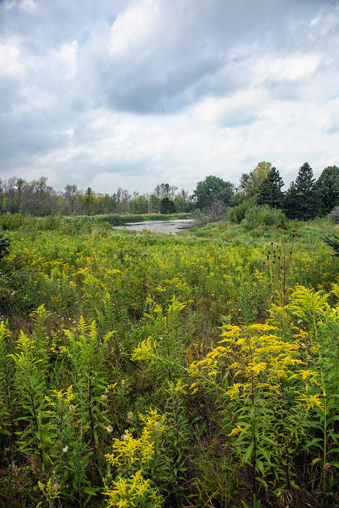 Prairie and pond.