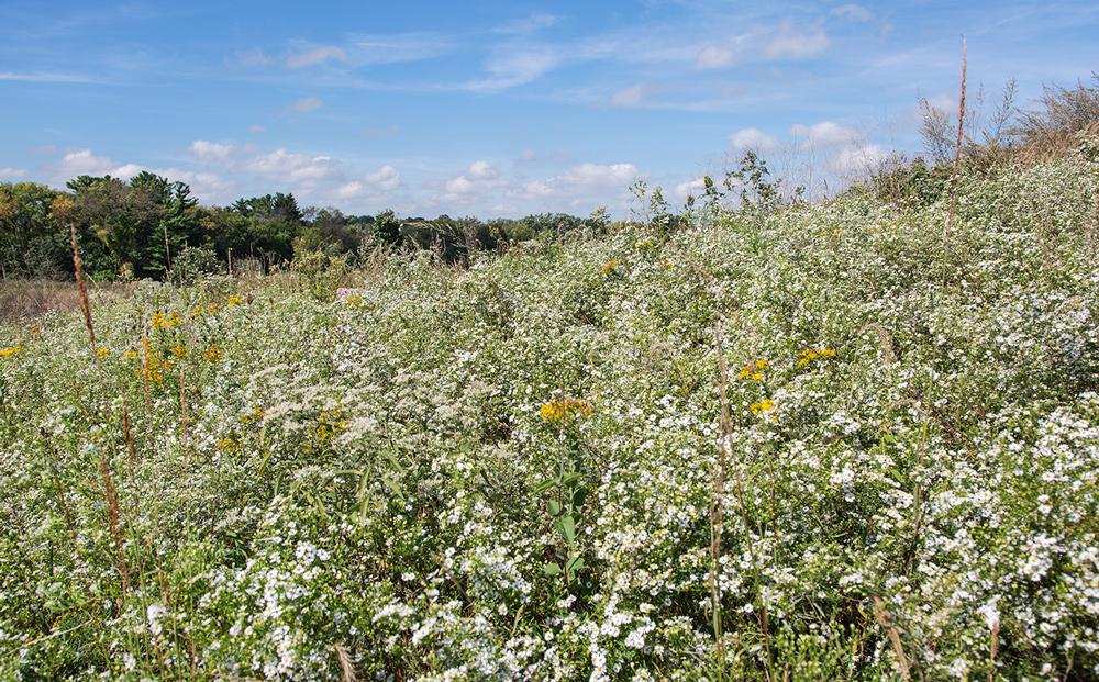 Wildflowers on the hillside.