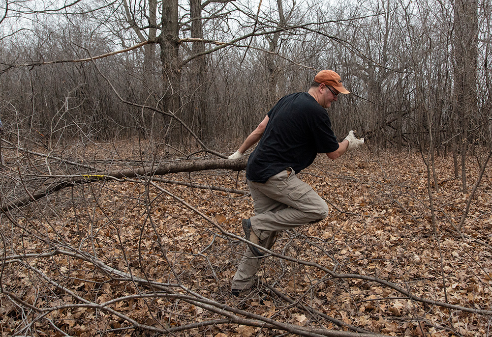 hauling cut buckthorn