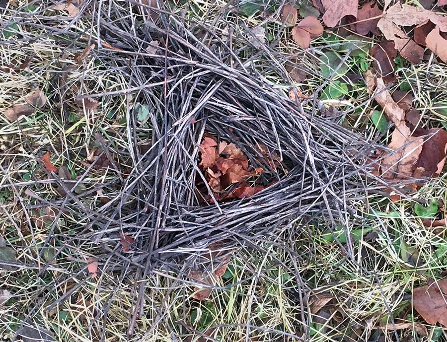 nest marker