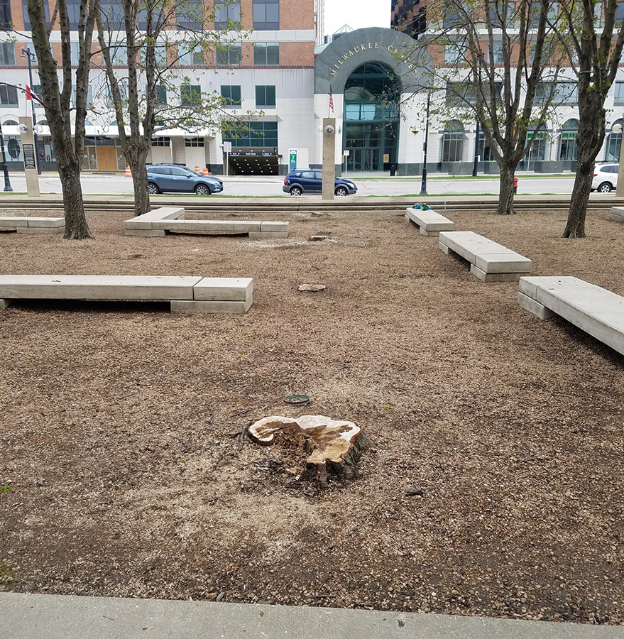 a tree stump and benches in the former chestnut grove