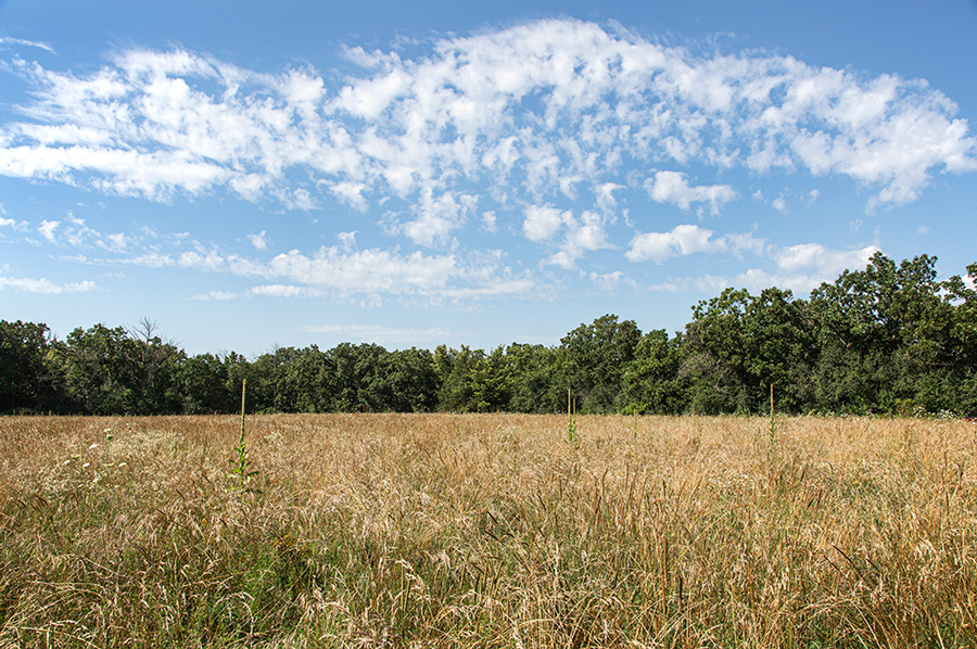 A broad field of tall grass and wildflowers with trees in the background
