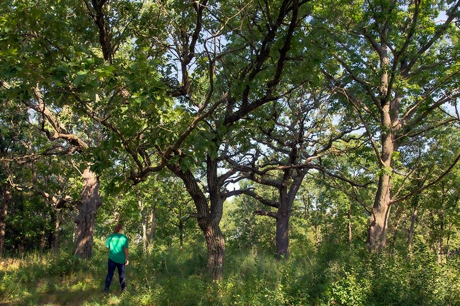 A young woman walking in an oak grove