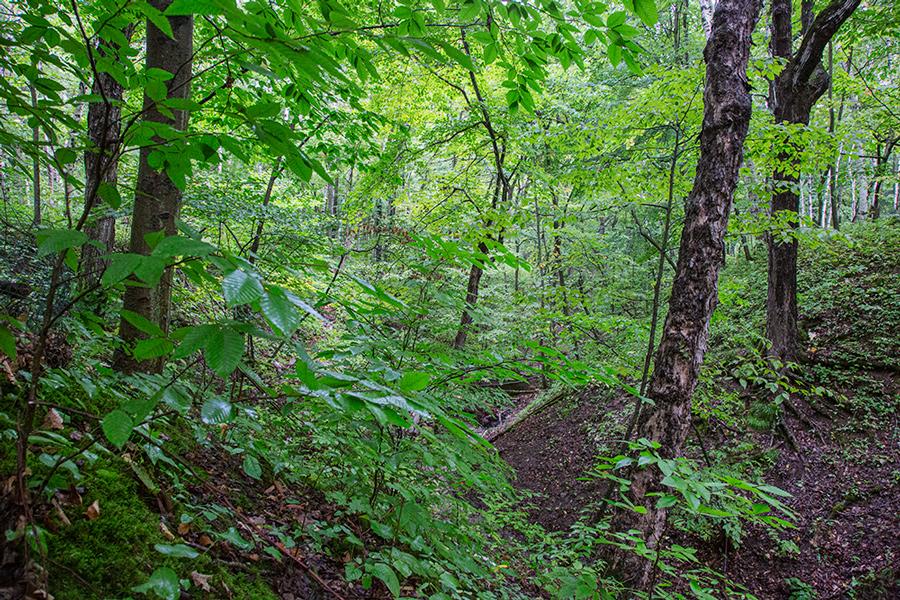 a ravine with lush green foliage