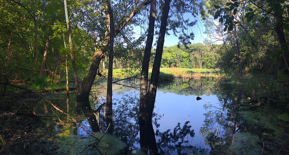 wetland pond surrounded by woodland
