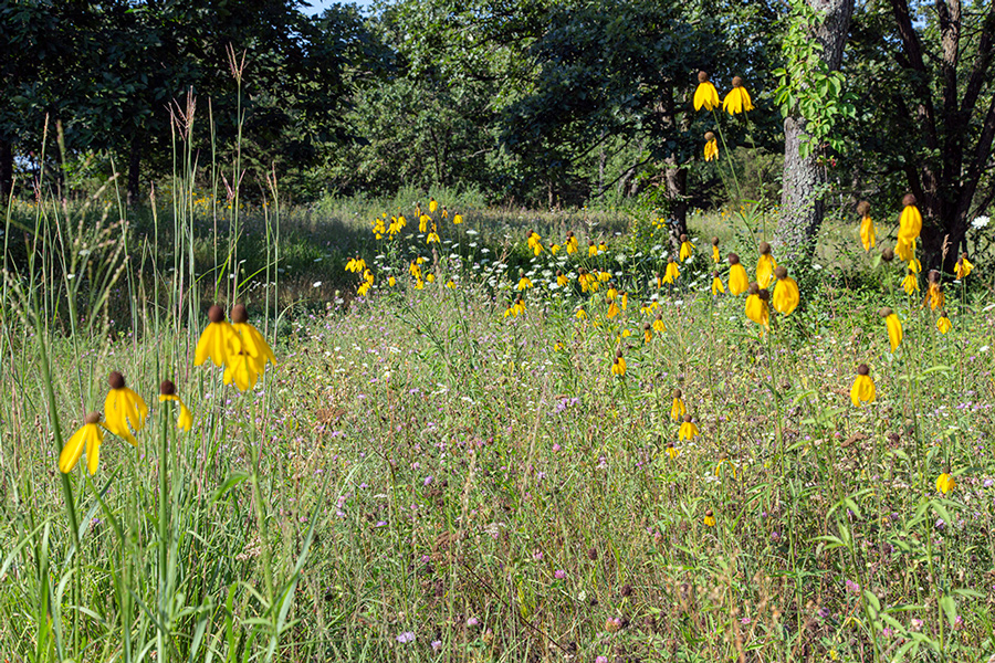 wildflowers in a woodland meadow