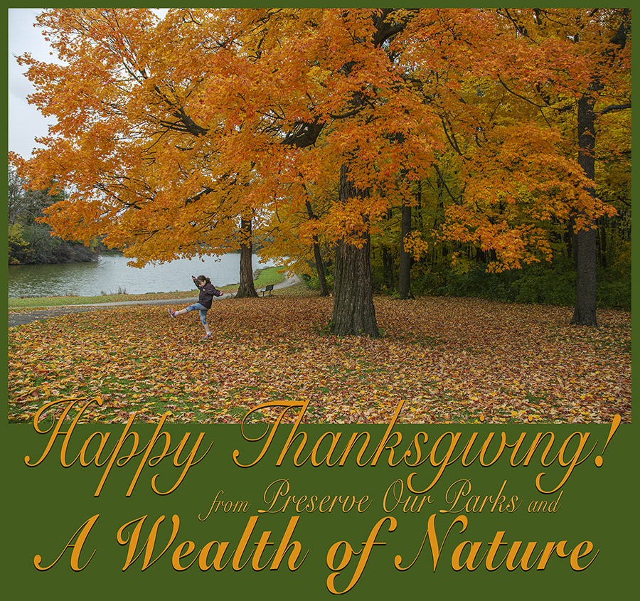 Thanksgiving message on a photo of an autumn maple at Jackson Park