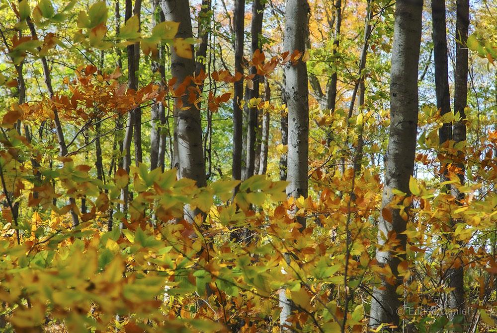Autumn paints the woods. Kurtz Woods State Natural Area.