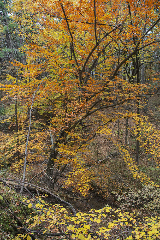 The gorge in autumn