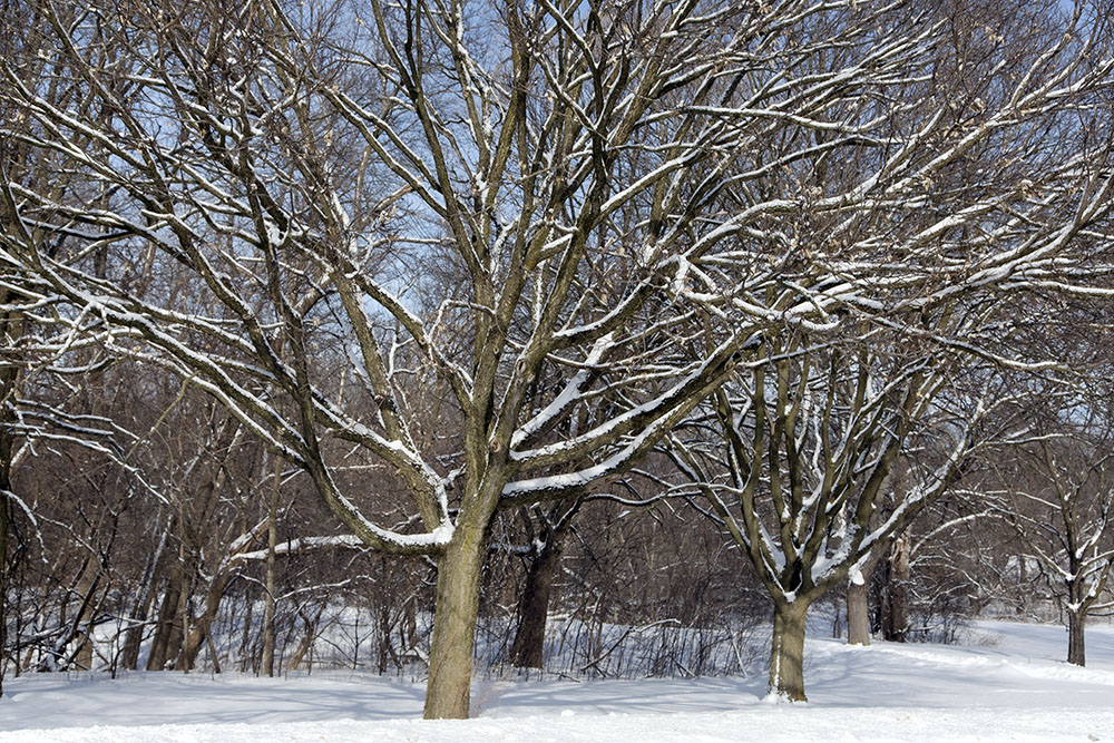 The Milwaukee River Parkway