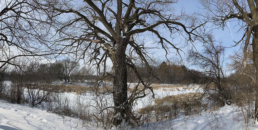 Lincoln Park Wilderness
