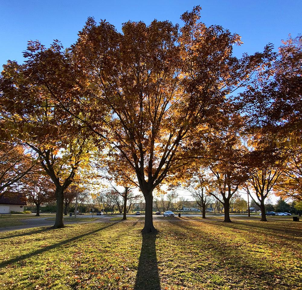 Sunset through autumn leaves at Kulwicki Park, Greenfield.
