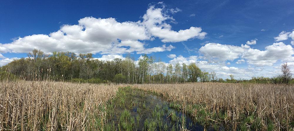 Honey Creek Wildlife Area, Racine County