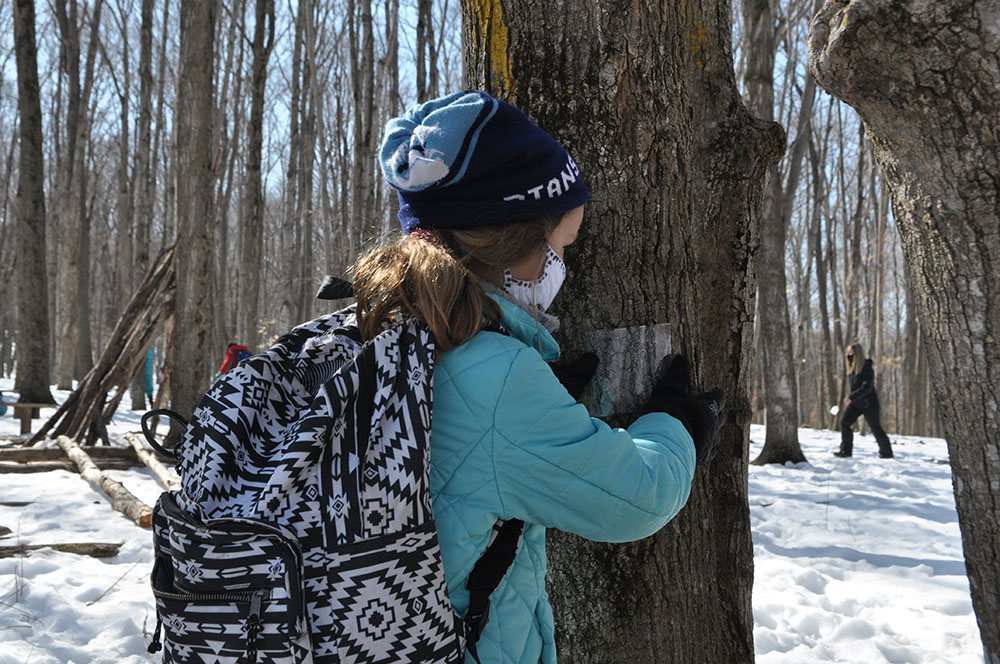 Riveredge School students using photographs to practice tree identification at Riveredge Nature Center.