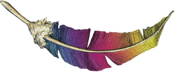 rainbow colored rooster feather from Wyile Cider