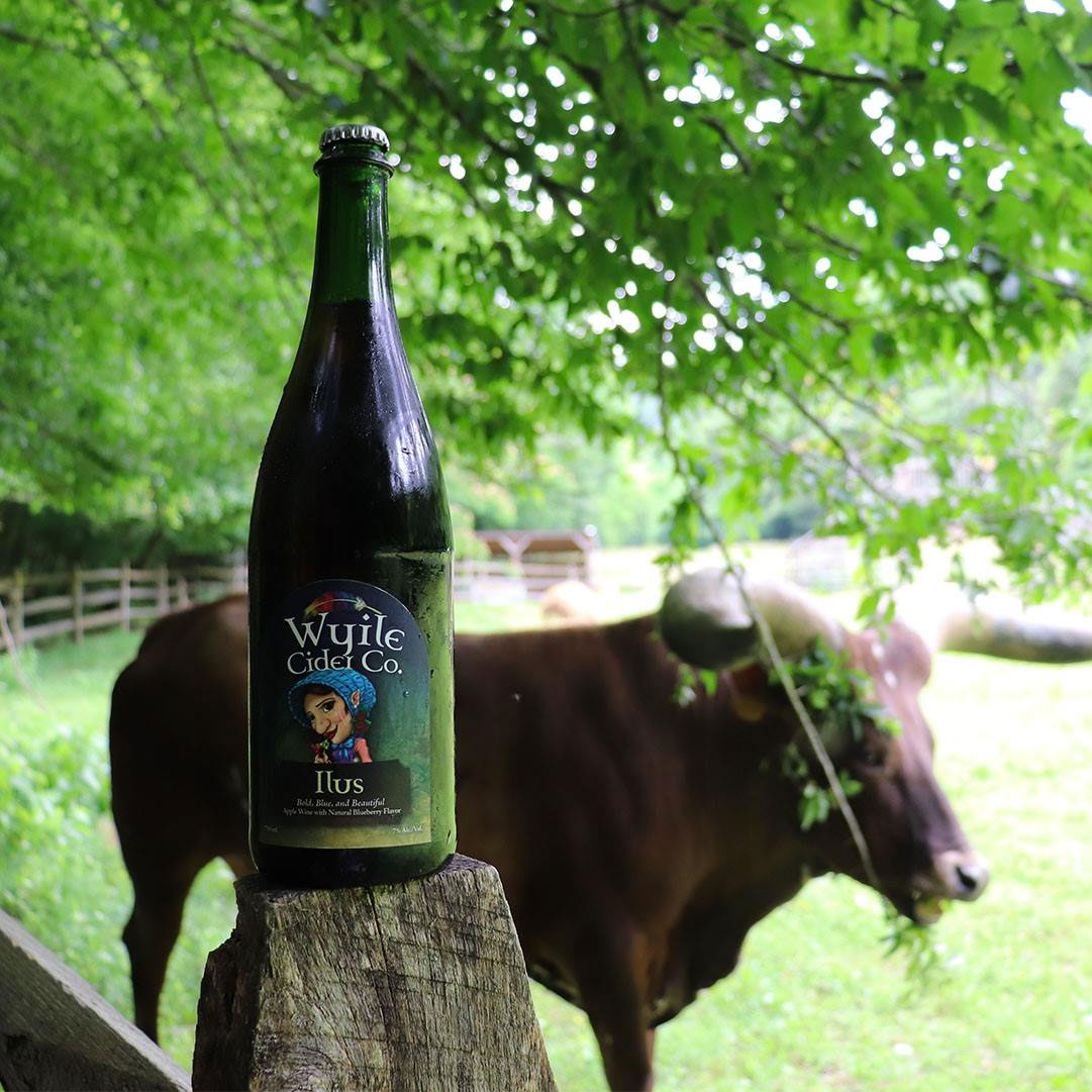 Bottle of sparkling cider on a fence post with cow in the background