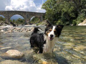 @whiskybc-genius-dog-challenge