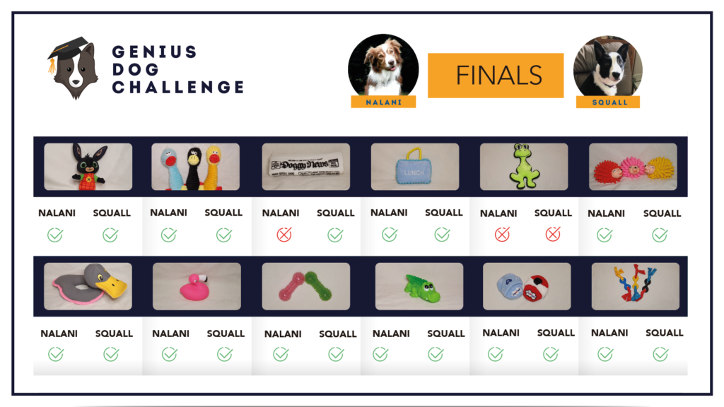 genius-dog-challenge