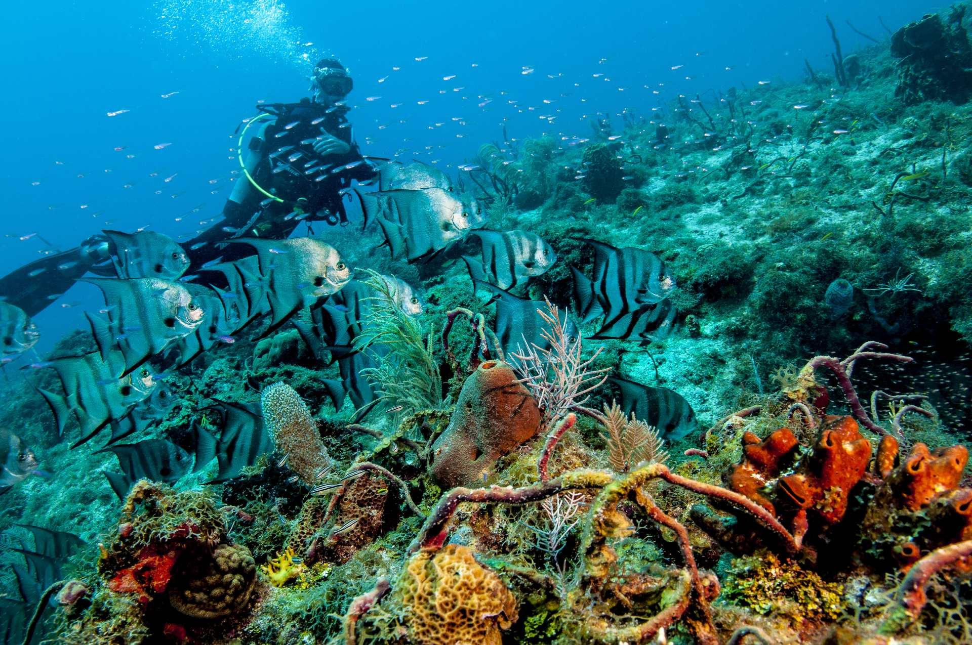 Deep Dive Financial