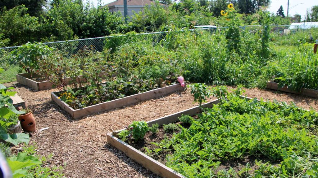 filbert-street-garden-beds-compost