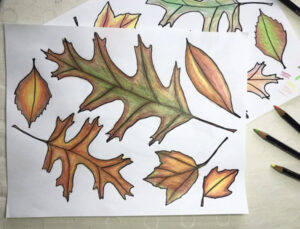 Fall leaves coloring page kids activity