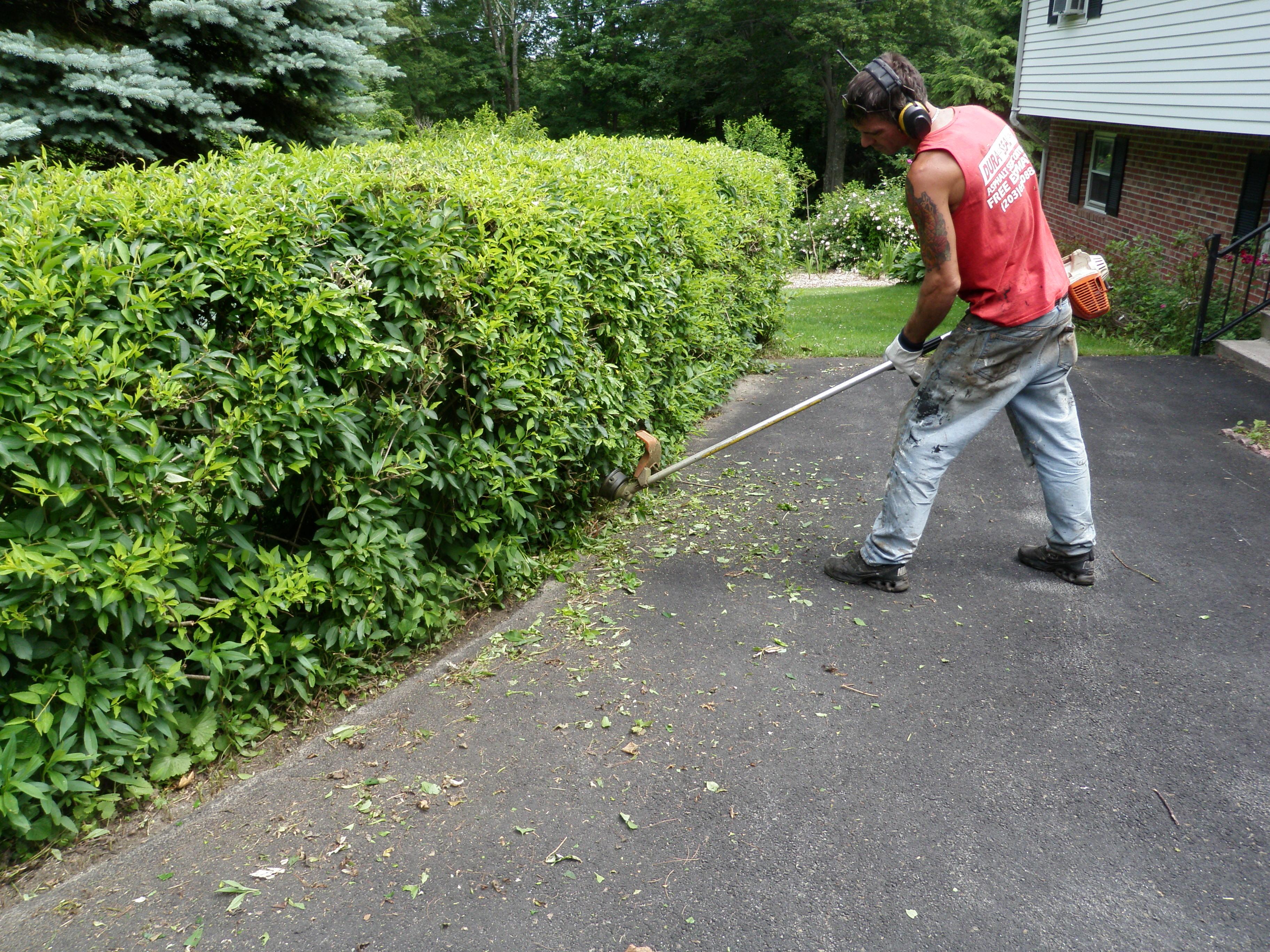Trimming Bushes Before Sealing Driveway