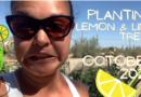 Planting Citrus Trees